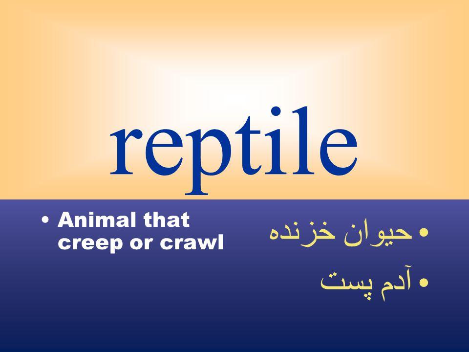 reptile Animal that creep or crawl حيوان خزنده آدم پست