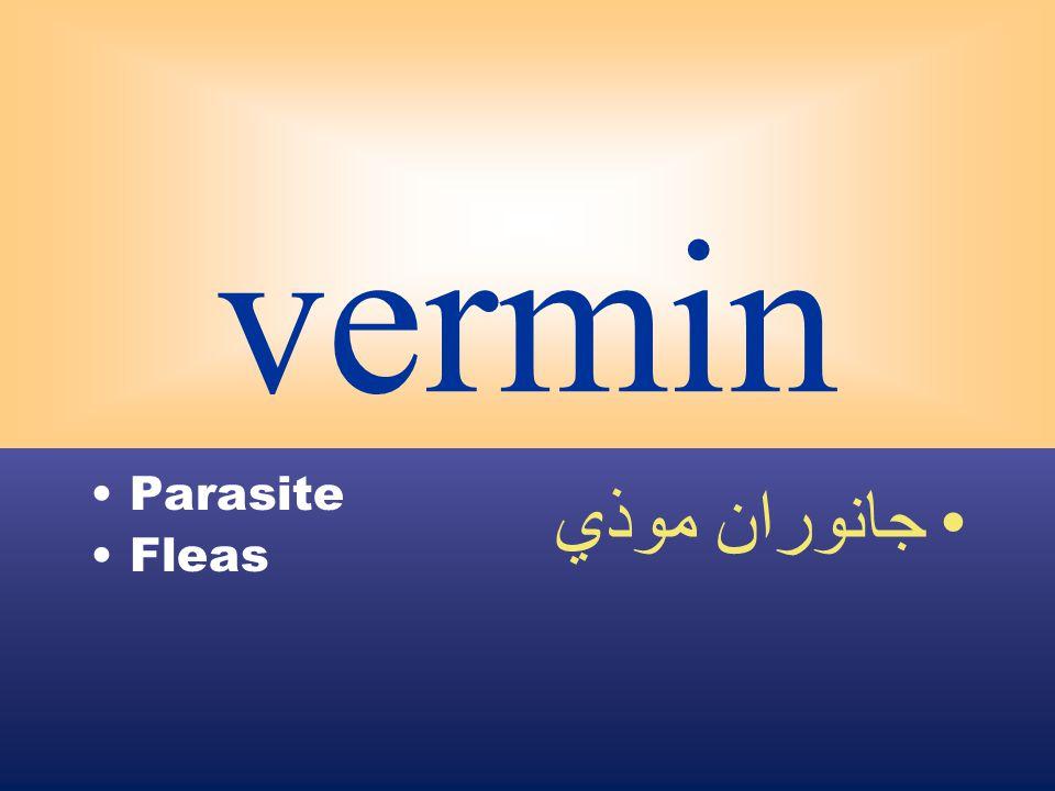vermin Parasite Fleas جانوران موذي