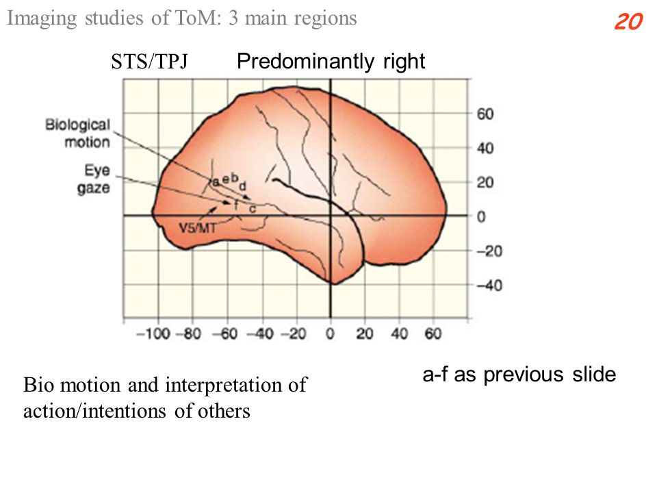 Bio motion and interpretation of action/intentions of others STS/TPJ 20 Predominantly right Imaging studies of ToM: 3 main regions a-f as previous slide