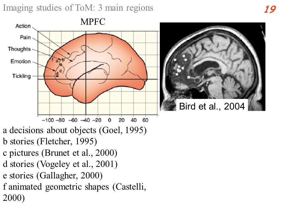 a decisions about objects (Goel, 1995) b stories (Fletcher, 1995) c pictures (Brunet et al., 2000) d stories (Vogeley et al., 2001) e stories (Gallagher, 2000) f animated geometric shapes (Castelli, 2000) Imaging studies of ToM: 3 main regions 19 MPFC Bird et al., 2004