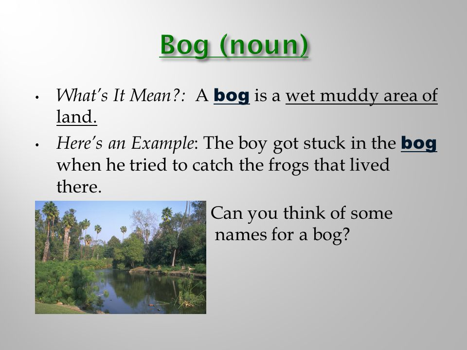 What's It Mean?: A bog is a wet muddy area of land.