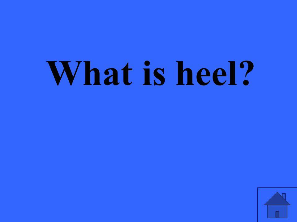 What is heel?