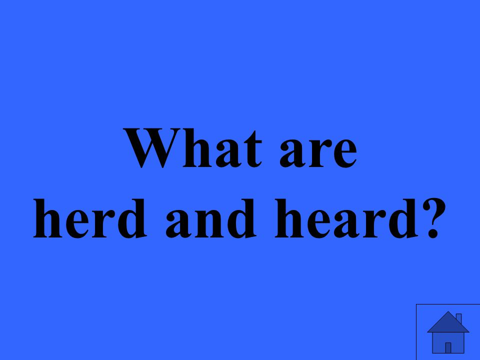 What are herd and heard?