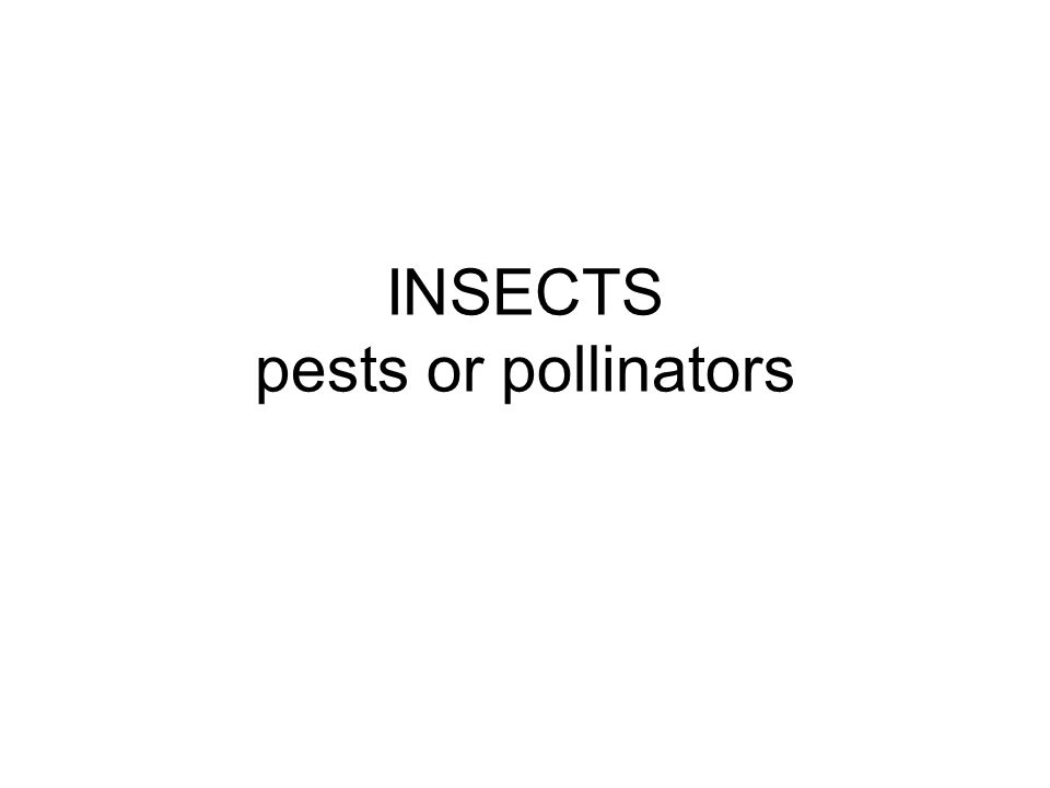 INSECTS pests or pollinators