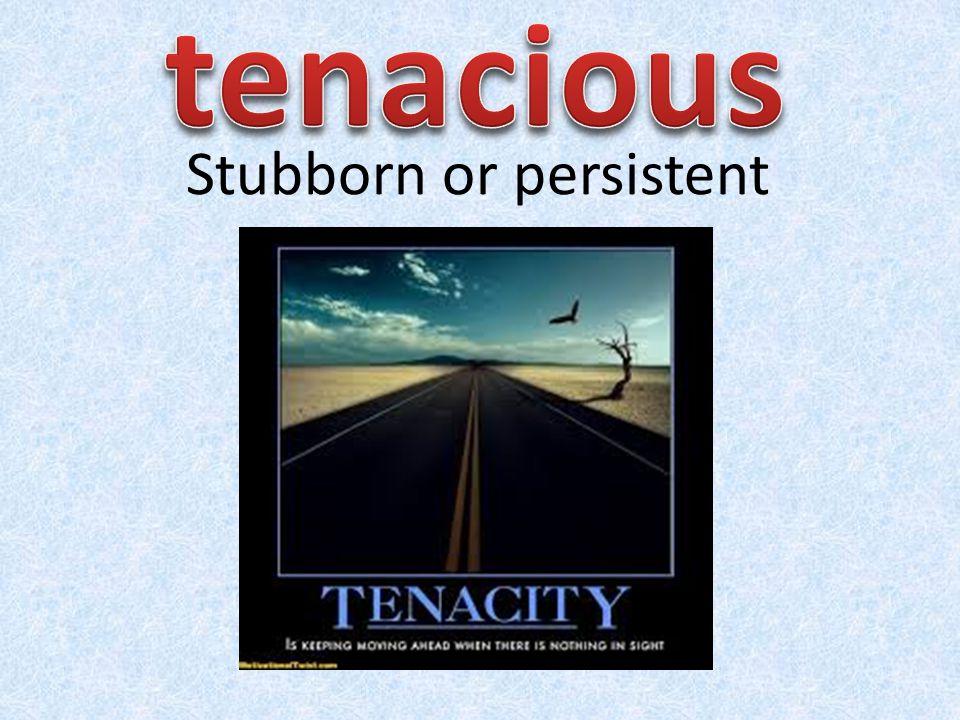 Stubborn or persistent