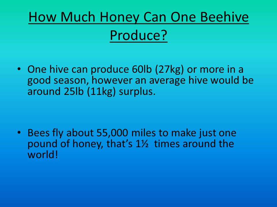 How Much Honey Can One Beehive Produce.