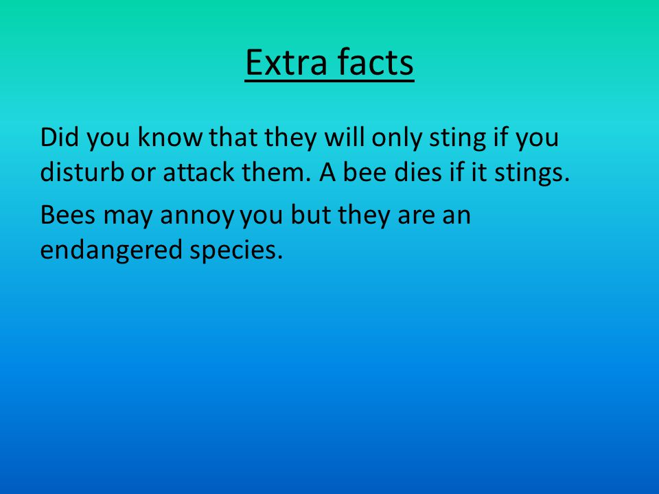 Extra facts Did you know that they will only sting if you disturb or attack them.
