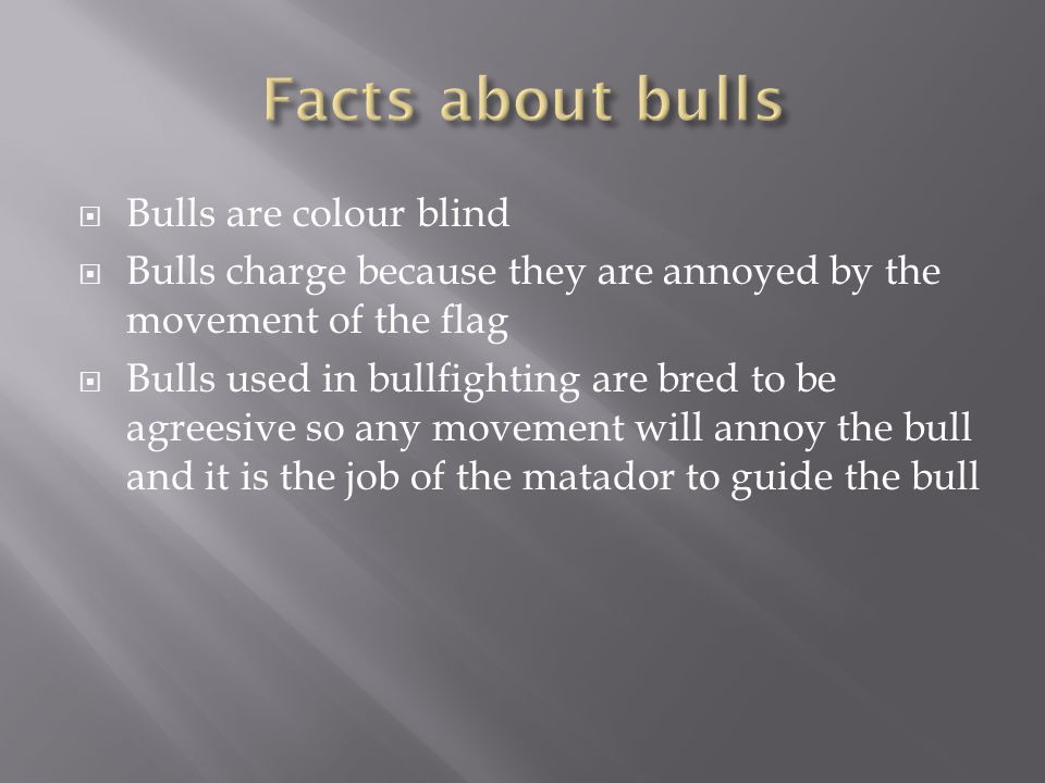  Bulls are colour blind  Bulls charge because they are annoyed by the movement of the flag  Bulls used in bullfighting are bred to be agreesive so any movement will annoy the bull and it is the job of the matador to guide the bull