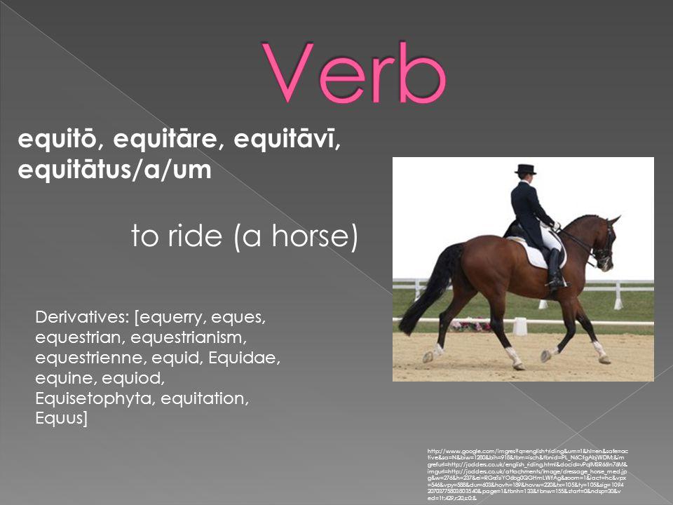 equitō, equitāre, equitāvī, equitātus/a/um http://www.google.com/imgres?q=english+riding&um=1&hl=en&safe=ac tive&sa=N&biw=1280&bih=918&tbm=isch&tbnid=PL_N6CfgAbjWDM:&im grefurl=http://jodders.co.uk/english_riding.html&docid=vPqIMSR66ln76M& imgurl=http://jodders.co.uk/attachments/Image/dressage_horse_med.jp g&w=276&h=237&ei=RGrzTsiYO6bg0QGHmLWfAg&zoom=1&iact=hc&vpx =546&vpy=588&dur=603&hovh=189&hovw=220&tx=105&ty=105&sig=1094 20703775803803540&page=1&tbnh=133&tbnw=155&start=0&ndsp=30&v ed=1t:429,r:20,s:0:& to ride (a horse) Derivatives: [equerry, eques, equestrian, equestrianism, equestrienne, equid, Equidae, equine, equiod, Equisetophyta, equitation, Equus]