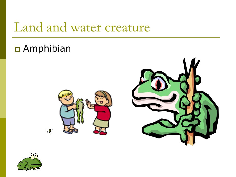 Land and water creature  Amphibian