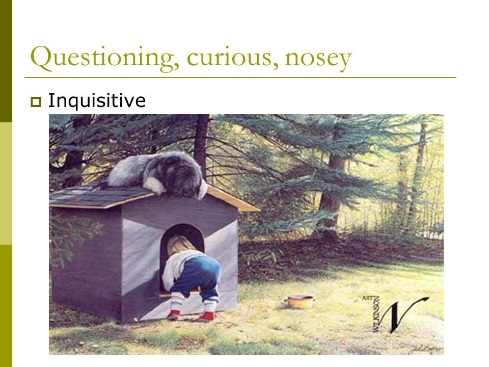 Questioning, curious, nosey  Inquisitive