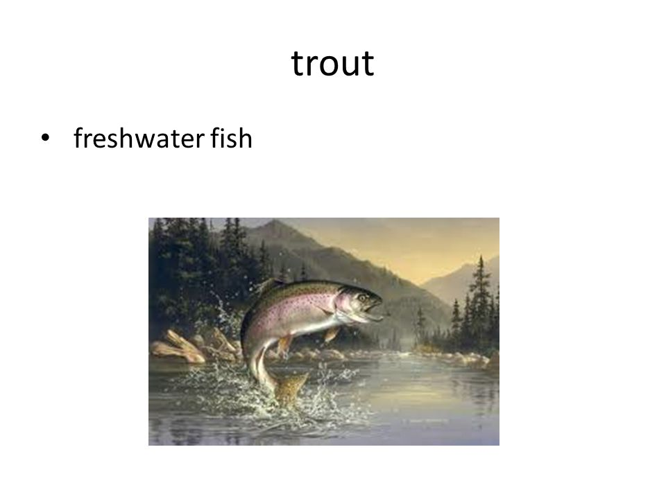 trout freshwater fish