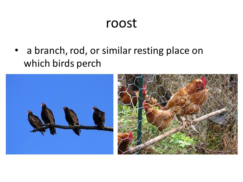 roost a branch, rod, or similar resting place on which birds perch