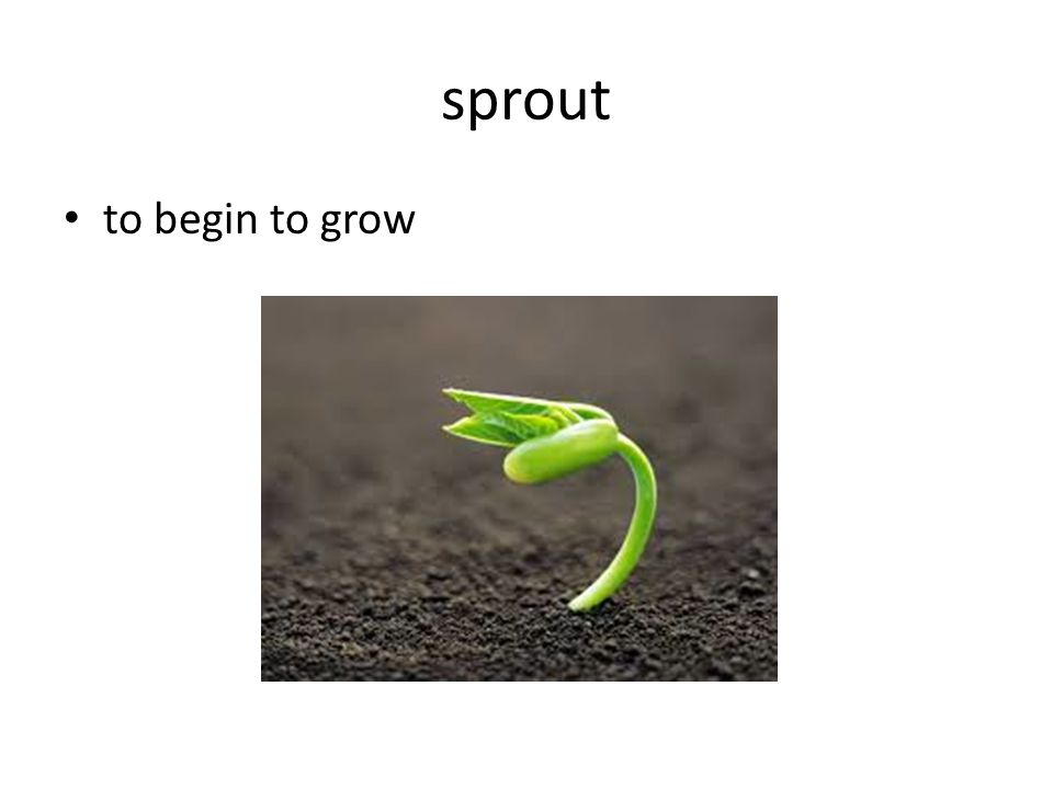sprout to begin to grow