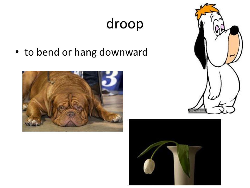 droop to bend or hang downward