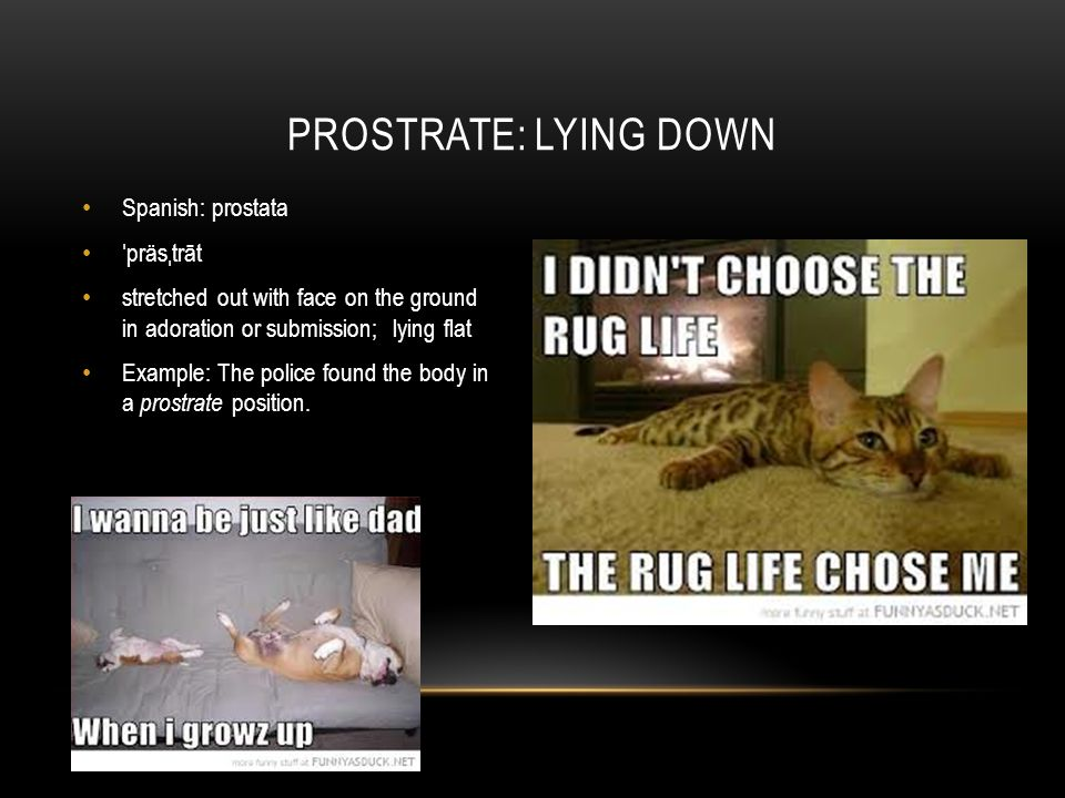 Spanish: prostata ˈ präs ˌ trāt stretched out with face on the ground in adoration or submission; lying flat Example: The police found the body in a prostrate position.