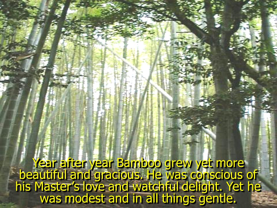 Bamboo shivered in terrible expectancy, whispering low, Master… cut away. The Sun hid his face.