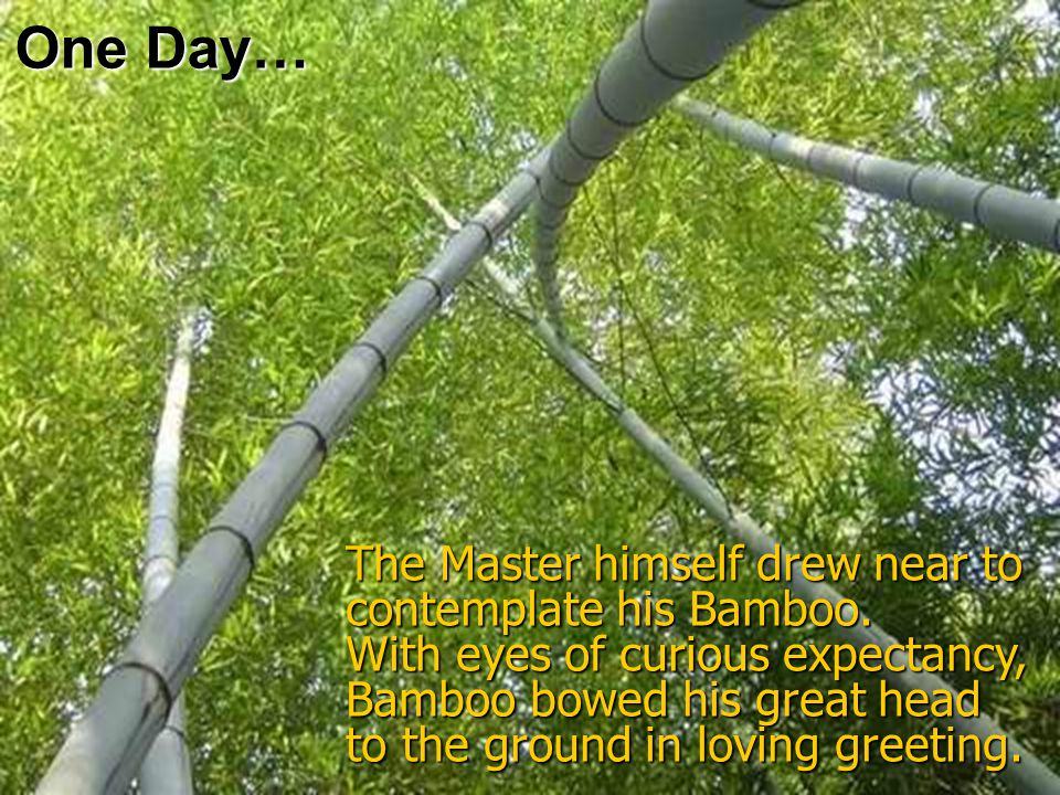 One Day… The Master himself drew near to contemplate his Bamboo.