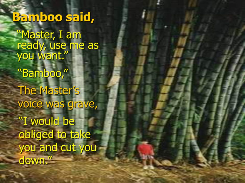 The Master Spoke… Bamboo, Bamboo… I would use you.