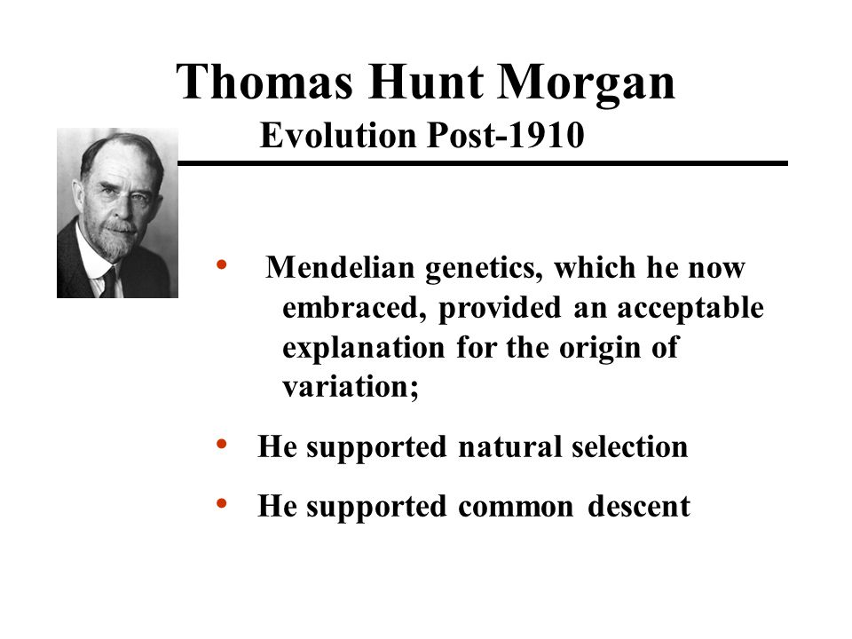 Thomas Hunt Morgan Evolution Post-1910 Mendelian genetics, which he now embraced, provided an acceptable explanation for the origin of variation; He supported natural selection He supported common descent