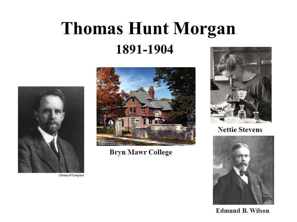 Thomas Hunt Morgan 1891-1904 Bryn Mawr College Edmund B. Wilson Nettie Stevens