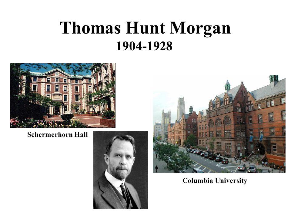 Thomas Hunt Morgan 1904-1928 Columbia University Schermerhorn Hall