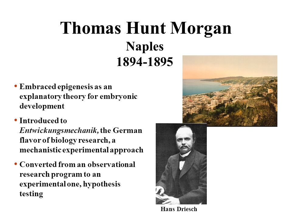 Thomas Hunt Morgan Genetics Post-1910 Mendel's factors must reside on chromosomes Each factor resides on a particular chromosome The eye color trait is positioned on the X chromosome The red eye color variation is dominant to the white variation.