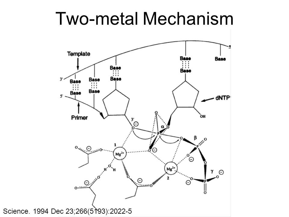Science. 1994 Dec 23;266(5193):2022-5 Two-metal Mechanism