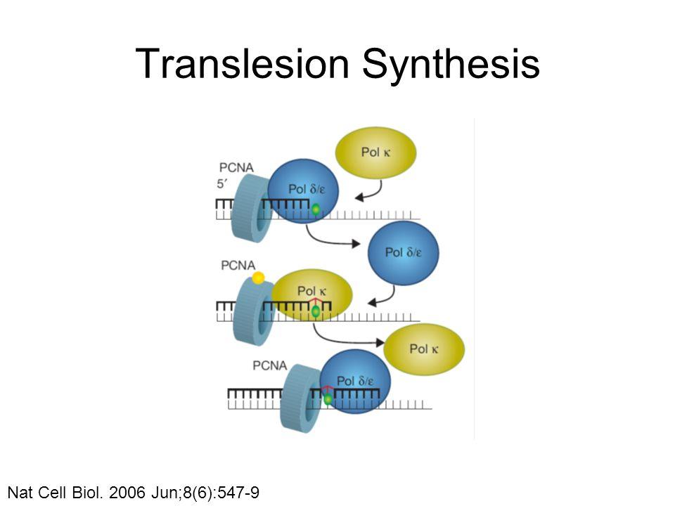 Translesion Synthesis Nat Cell Biol. 2006 Jun;8(6):547-9