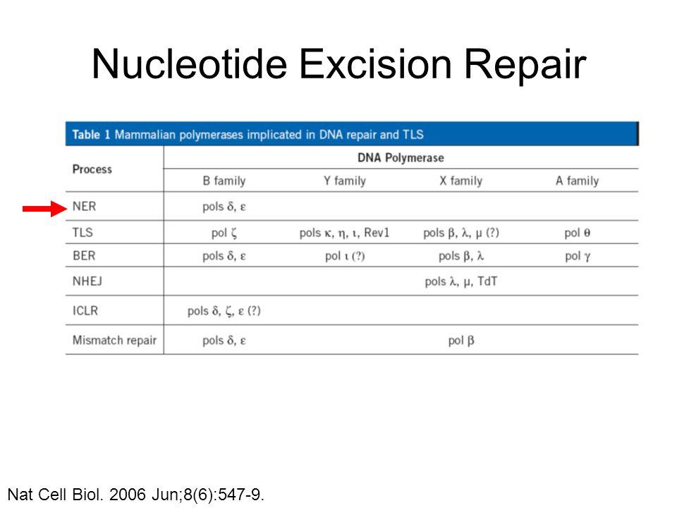 Nucleotide Excision Repair Nat Cell Biol. 2006 Jun;8(6):547-9.