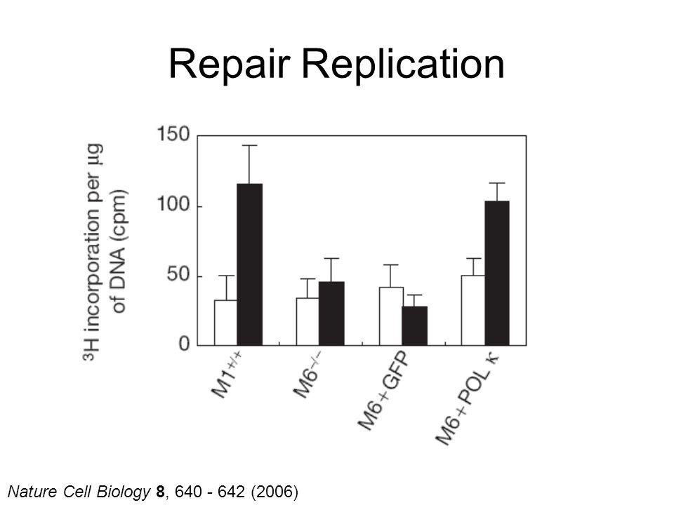 Nature Cell Biology 8, 640 - 642 (2006) Repair Replication