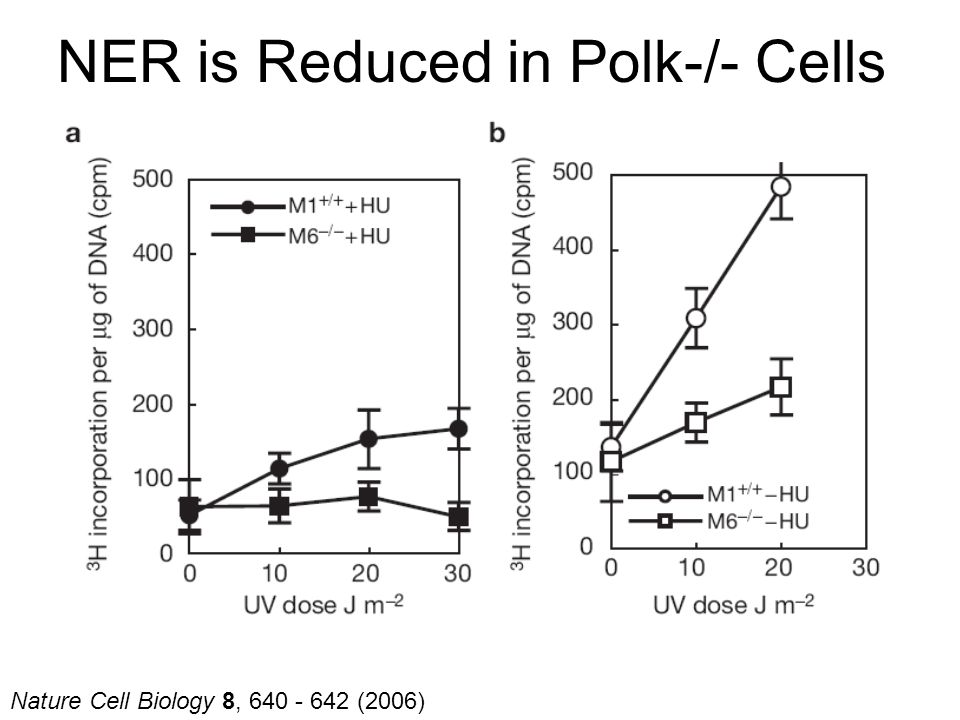 Nature Cell Biology 8, 640 - 642 (2006) NER is Reduced in Polk-/- Cells
