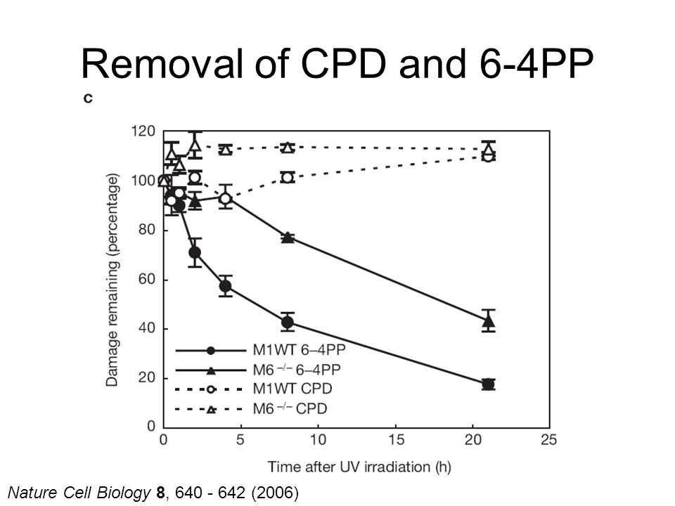 Nature Cell Biology 8, 640 - 642 (2006) Removal of CPD and 6-4PP