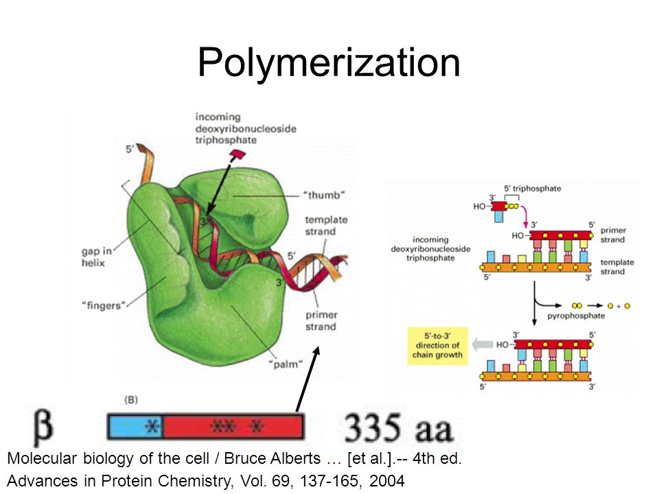 Polymerization Advances in Protein Chemistry, Vol.