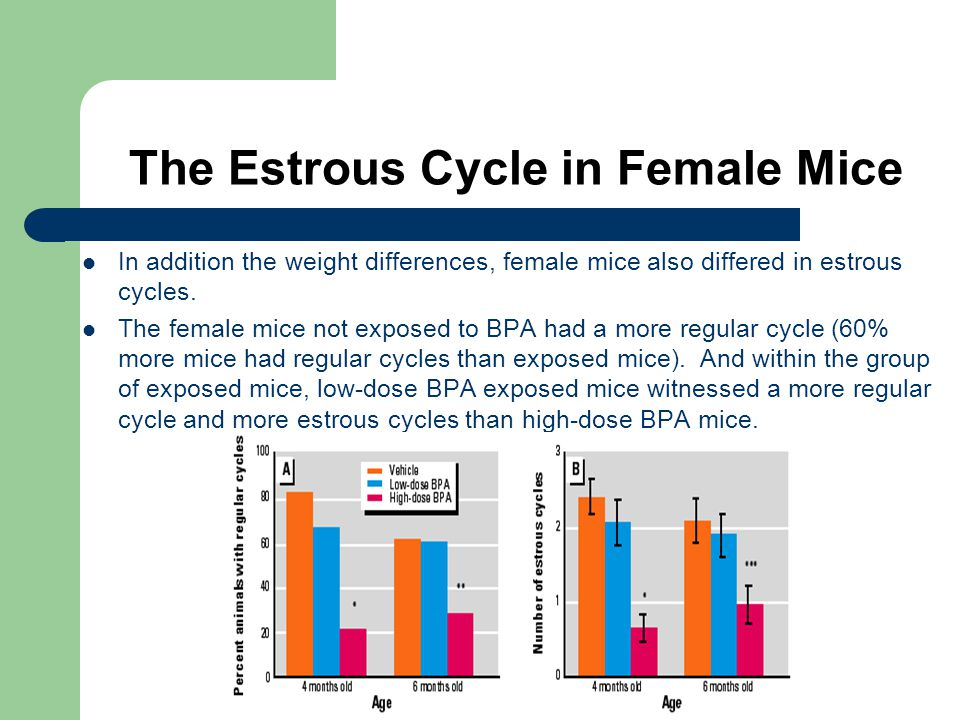 The Estrous Cycle in Female Mice In addition the weight differences, female mice also differed in estrous cycles.