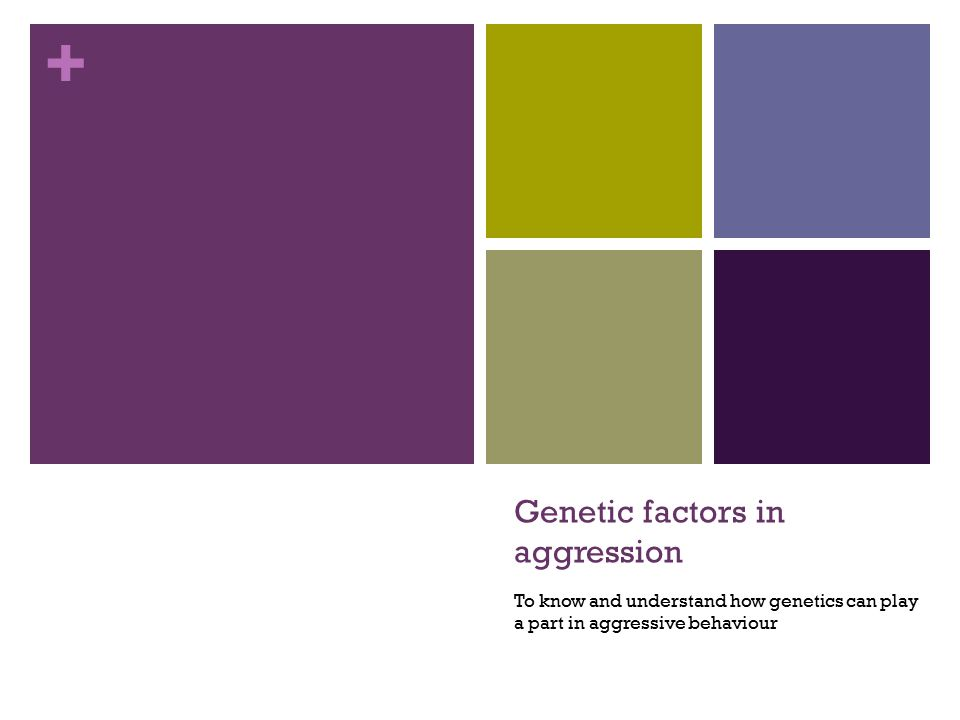 + Genetic factors in aggression To know and understand how genetics can play a part in aggressive behaviour
