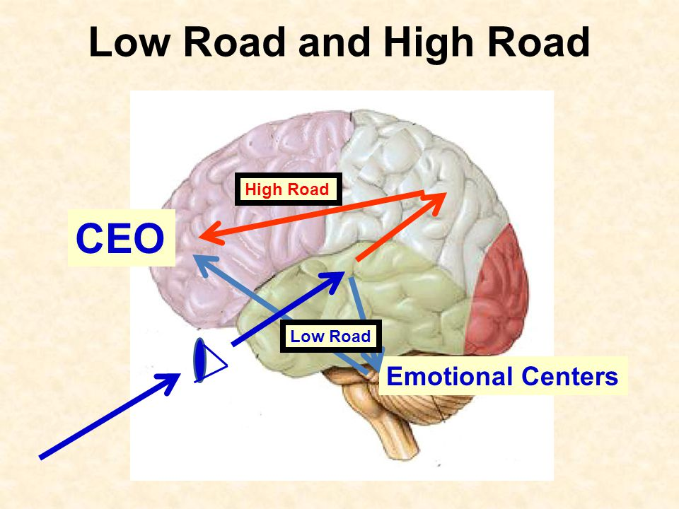 Low Road and High Road Emotional Centers High Road Low Road CEO