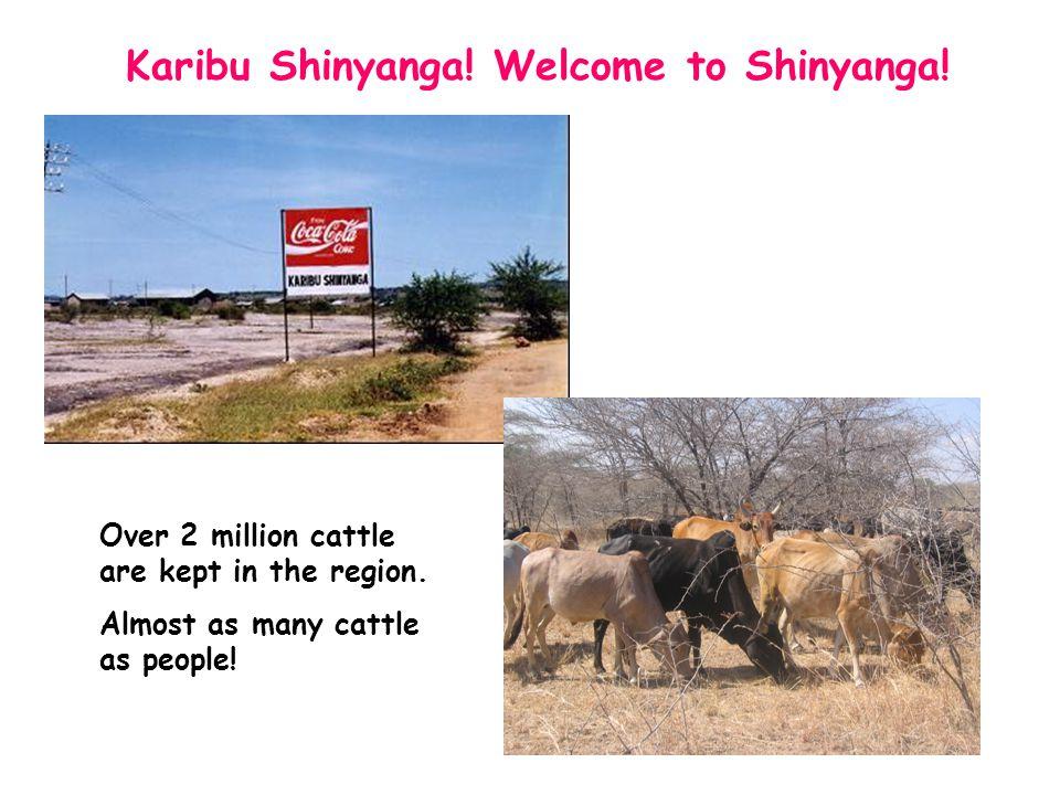 Karibu Shinyanga. Welcome to Shinyanga. Over 2 million cattle are kept in the region.