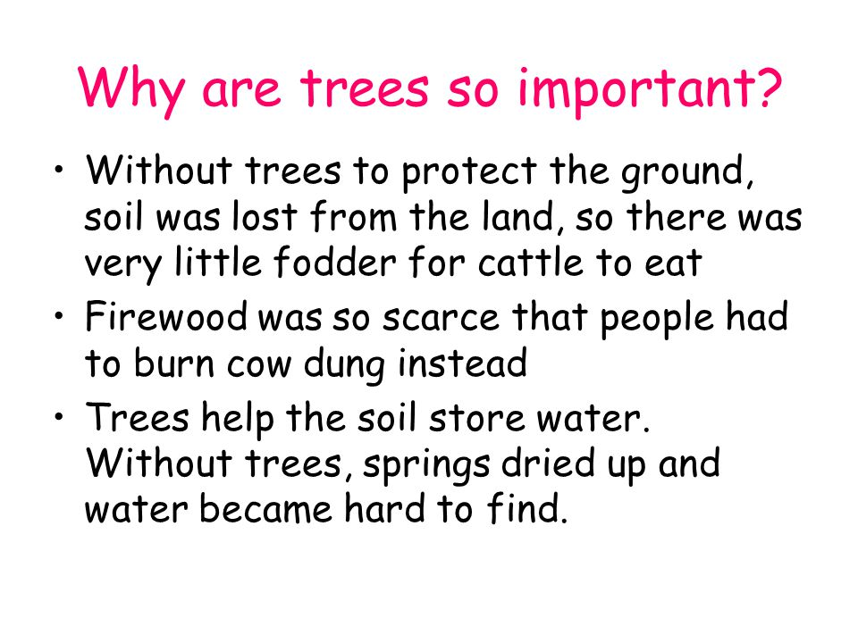 Without trees to protect the ground, soil was lost from the land, so there was very little fodder for cattle to eat Firewood was so scarce that people had to burn cow dung instead Trees help the soil store water.