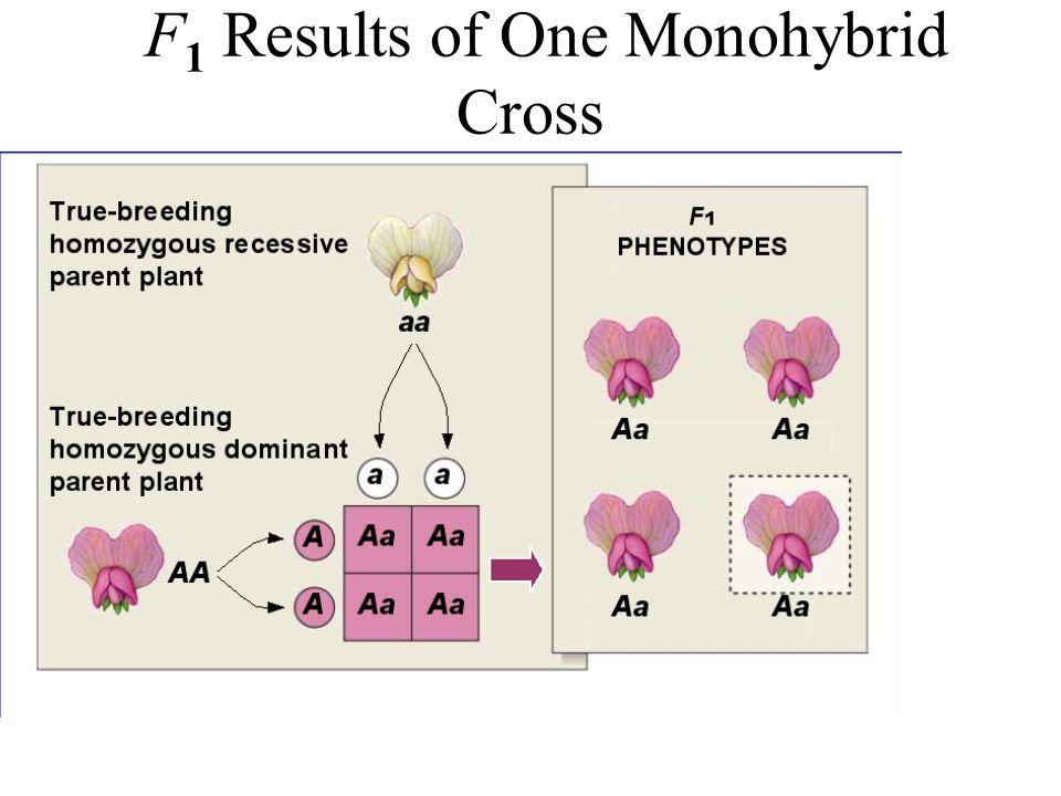 F 1 Results of One Monohybrid Cross