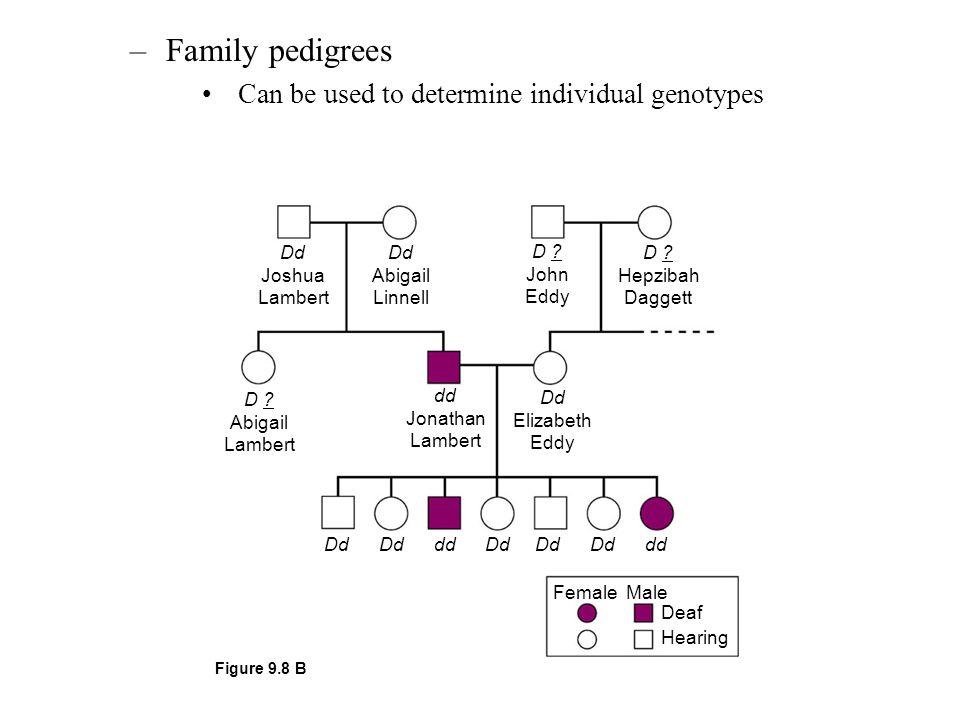 –Family pedigrees Can be used to determine individual genotypes Dd Joshua Lambert Dd Abigail Linnell D ? John Eddy D ? Hepzibah Daggett D ? Abigail La