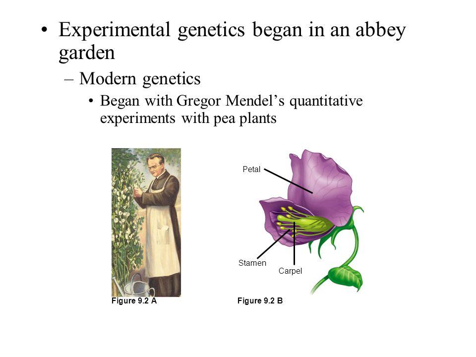 Experimental genetics began in an abbey garden –Modern genetics Began with Gregor Mendel's quantitative experiments with pea plants Petal Carpel Stame