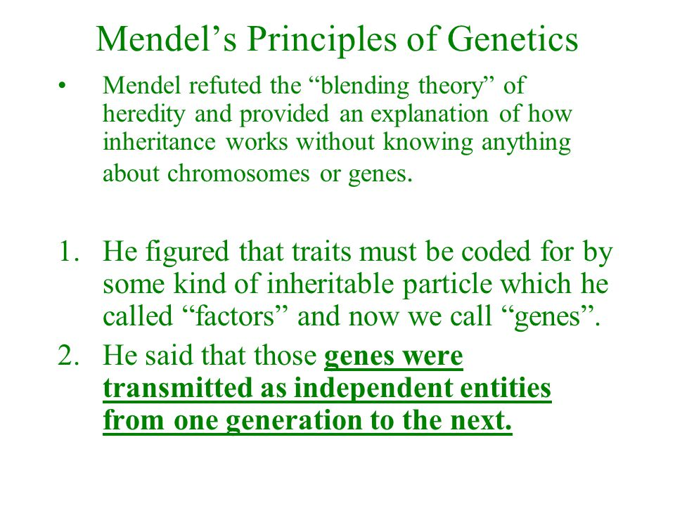 """Mendel's Principles of Genetics Mendel refuted the """"blending theory"""" of heredity and provided an explanation of how inheritance works without knowing"""