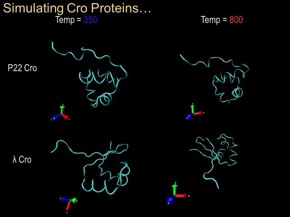 Simulating Cro Proteins… Temp = 350 Temp = 800 Temp = 350 Temp = 800 P22 Cro λ Cro