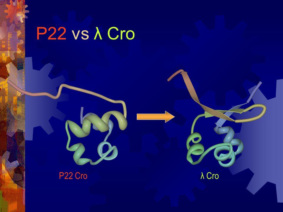 P22 vs λ Cro P22 Croλ Cro