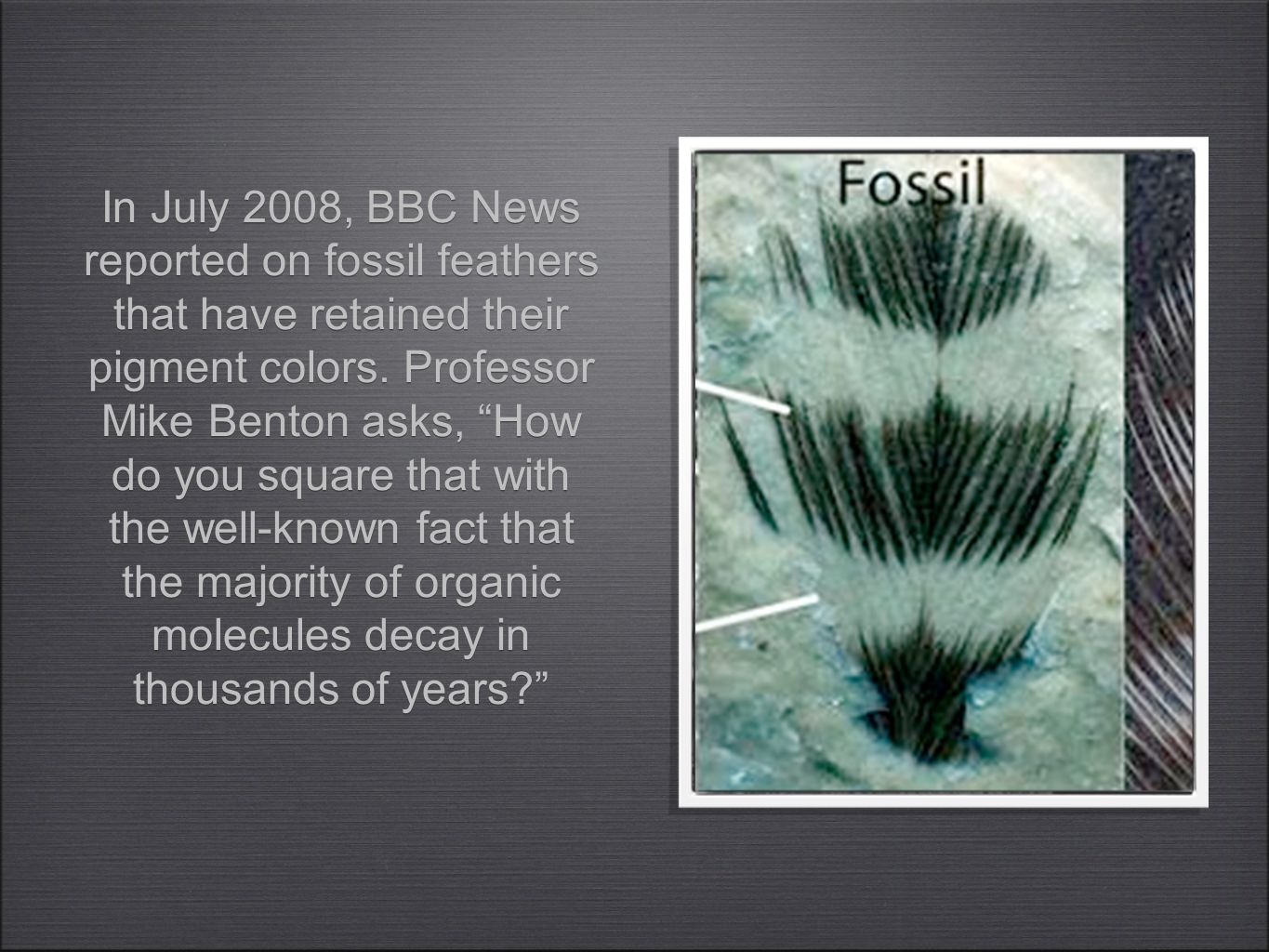In July 2008, BBC News reported on fossil feathers that have retained their pigment colors.