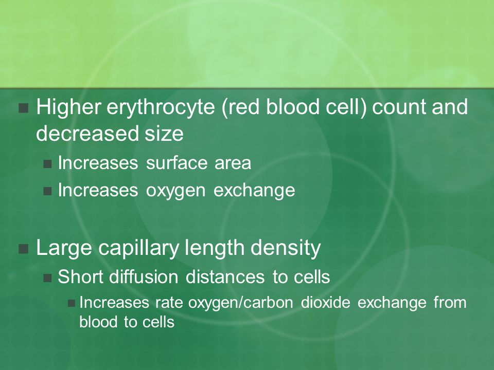 Higher erythrocyte (red blood cell) count and decreased size Increases surface area Increases oxygen exchange Large capillary length density Short diffusion distances to cells Increases rate oxygen/carbon dioxide exchange from blood to cells