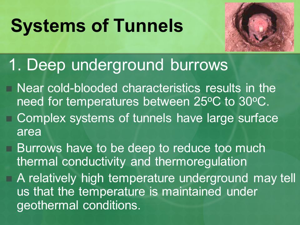 Systems of Tunnels Near cold-blooded characteristics results in the need for temperatures between 25 o C to 30 o C.