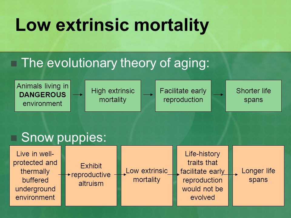 Low extrinsic mortality The evolutionary theory of aging: Snow puppies: Animals living in DANGEROUS environment High extrinsic mortality Facilitate early reproduction Shorter life spans Live in well- protected and thermally buffered underground environment Exhibit reproductive altruism Low extrinsic mortality Longer life spans Life-history traits that facilitate early reproduction would not be evolved