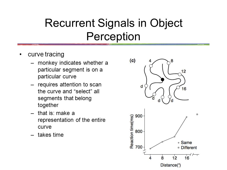 Recurrent Signals in Object Perception curve tracing –monkey indicates whether a particular segment is on a particular curve –requires attention to scan the curve and select all segments that belong together –that is: make a representation of the entire curve –takes time